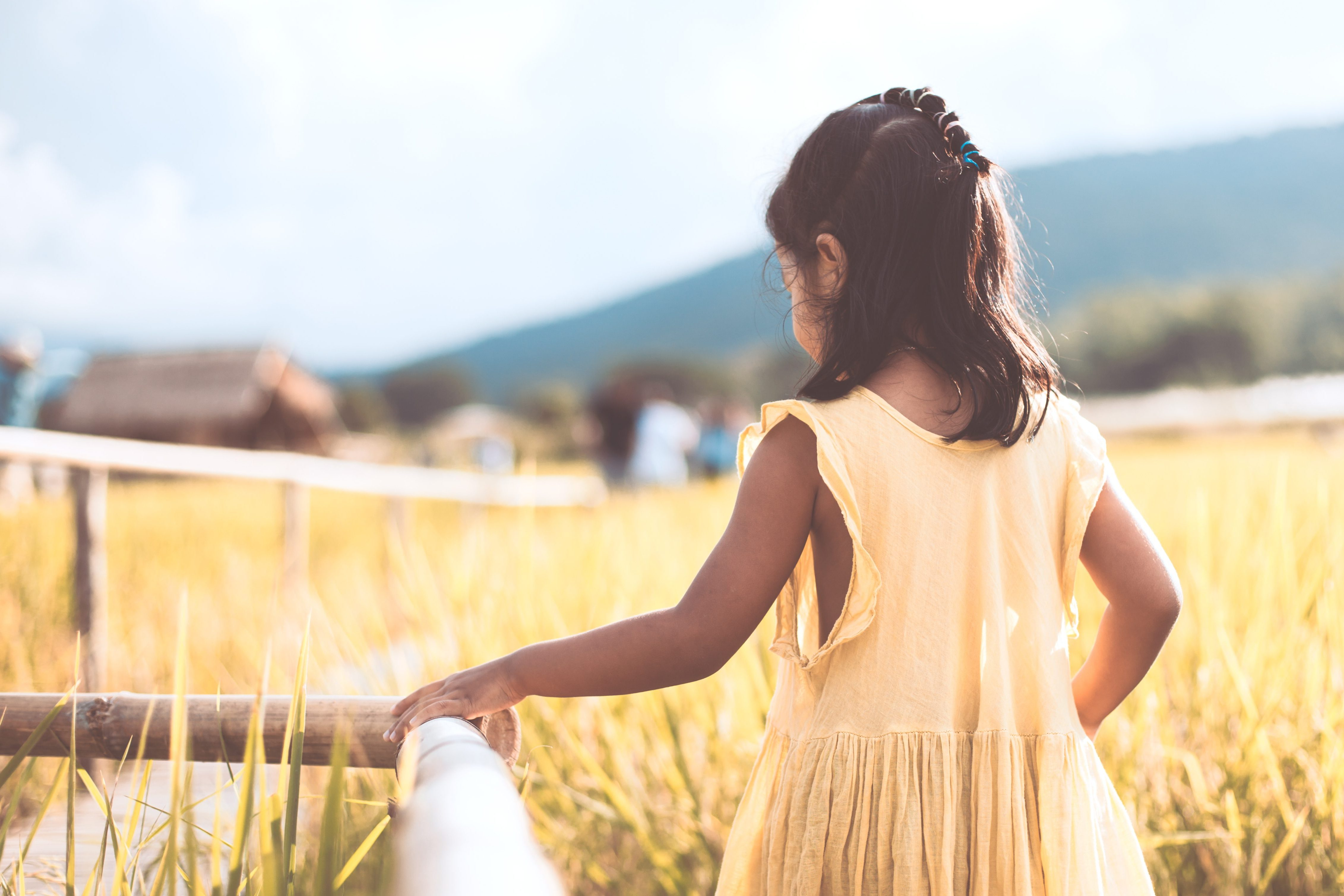 Back view of little child girl walking in bamboo walkway at the cornfield